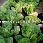 Important Tips to Keep your Garden Free from Insects