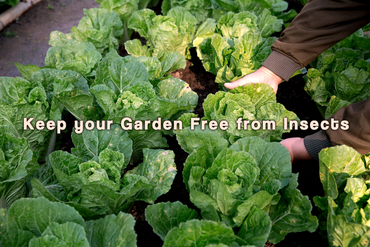 care for insect free garden