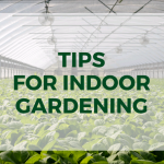 Why not Grow Year Around with an Indoor Garden?