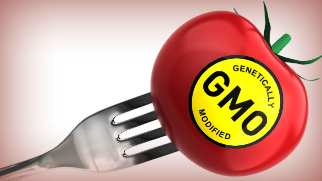 Genetically Modified Organisms Examples